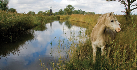 A pony in autumn on The Broads