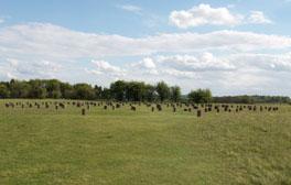Walk around the Stonehenge Landscape