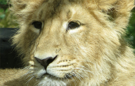 Visit the animals at Bristol Zoo Gardens